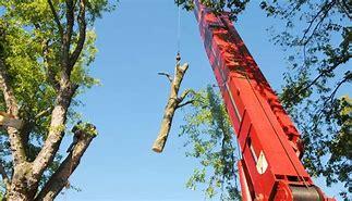 tree service louisville